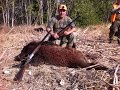 DOMUZ AVI ( Wild Boar )2017 Chasse Sanglier & Лов на дива свиня