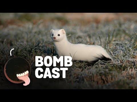 Giant Bombcast 708: wallbabies
