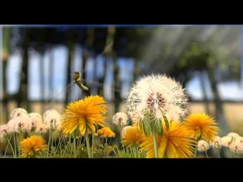EPM -- Plan Planeta -- Álbum jet planeta sorprendente
