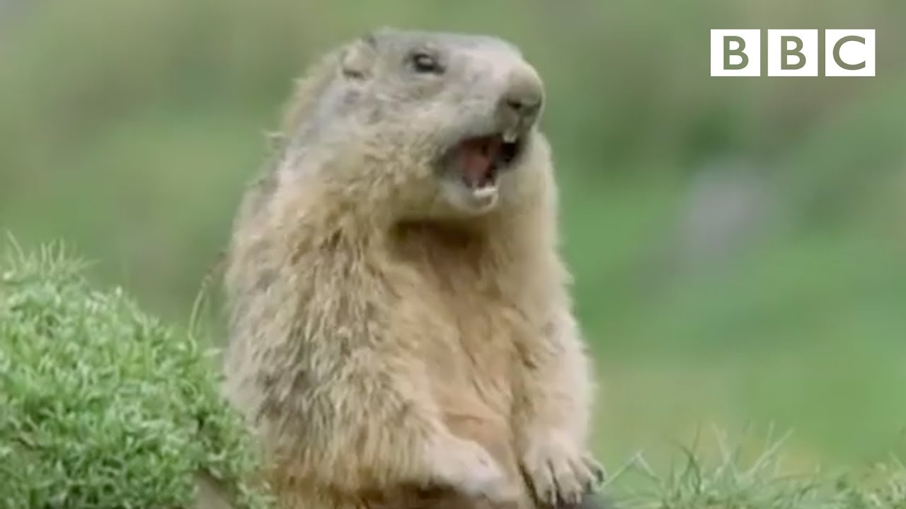 Funny Talking Animals Alan Walk On The Wild Side Preview Bbc One