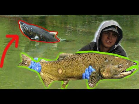 SALMON River Fishing BOBBER DOWN!! (Float Fishing W/ Skein)