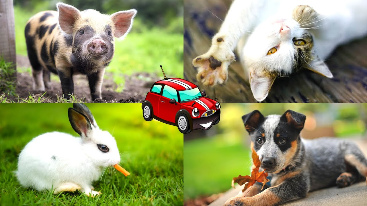 QUIZ Learn domestic animals and sounds for kids. Викторина: учим домашних животных на английском