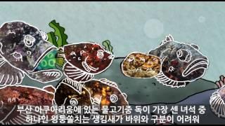 [부산아쿠아리움] 위장술의 끝판왕~ 왕퉁쏠치