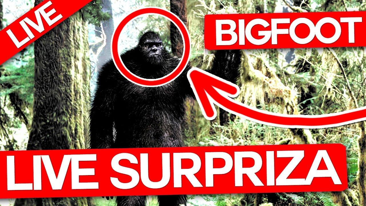 Atac Noua Zeelanda Update: IL PRINDEM PE BIGFOOT! MIT SAU REALITATE ?