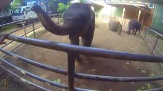 видео Шри-Ланка в июле