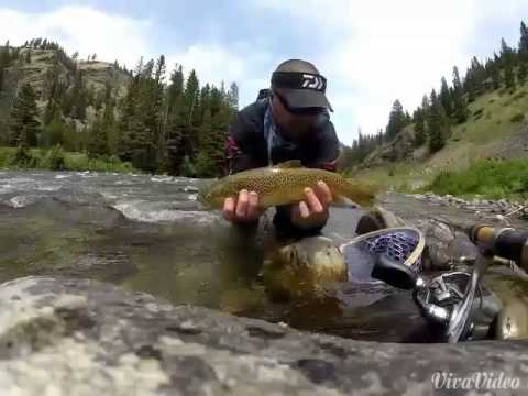Fishing Trout in Yellowstone