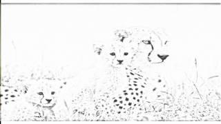 Auto Draw 2: Cheetah Mother And Cubs, Maasai Mara Reserve, Kenya