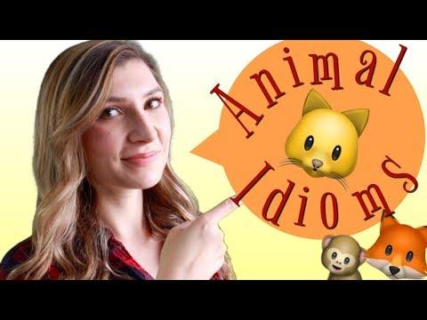 Thành ngữ tiếng Anh về động vật(cải thiện vốn tiếng Anh cho bạn)