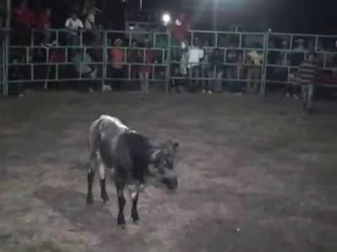 Xochihuehuetlan,Gro, Jaripeo de Feria 2014...