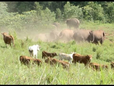 Wild Asian Elephants Spotted in SW China's Plantation