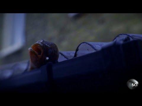 Raining Fish In London | World's Strangest