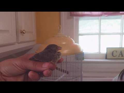 Feeding wild baby bird, Eggetha