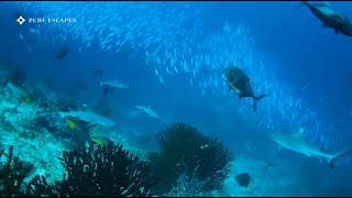 Best Diving in Maldives