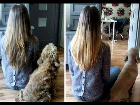 Dogs Before And After Their Haircuts Add Yours - Funny Fail Compilation