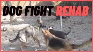 Dog Fight Rehab- Aggressive Dog Rehab Solid K9 Training