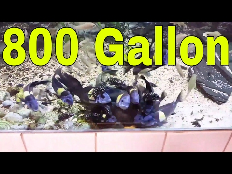 My Fishstore Tour! Awesome Fishstore Tour! Part 1 800 Gallon Tank Akvarievalvet / The Aquarium Vault