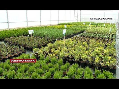 В Крыму открылся уникальный питомник растений «Лаванда»