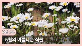 [천리포수목원 Letter] 천리포수목원 레터/아름다운…