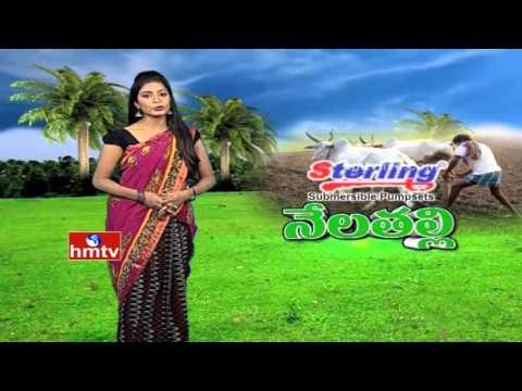 Nela Talli | Don't Grow Cotton | Sea Water for Crops and Drinking | Mango Types in India  | HMTV
