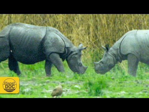 Rhinoceros - Wild Animals