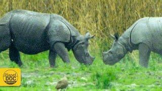 Rhinoceros - Wild Animals
