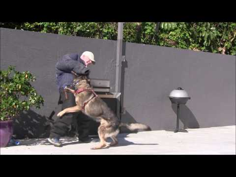 The World Leaders in Trained Protection Dogs!