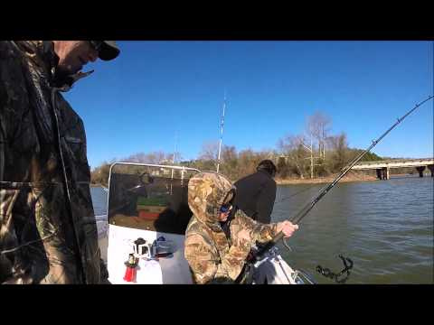 Striper Fishing On Lake Hartwell. Striper Guide On Lake Hartwell.