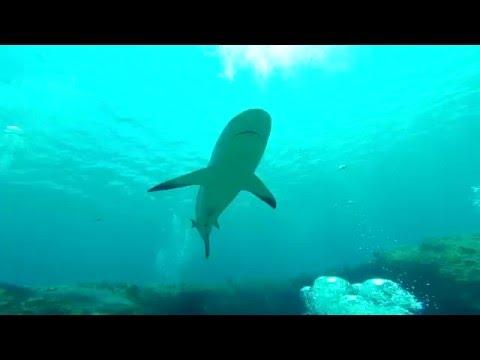 Diving Cuba with Sven Lindblad