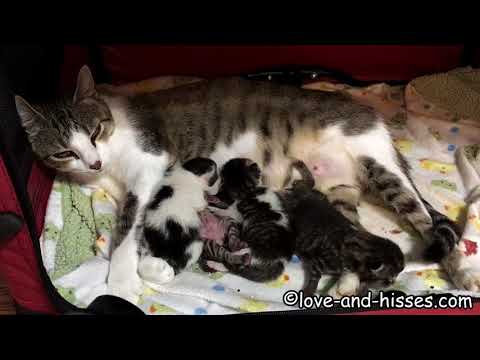 The week in kittens - from newborn to 3 days old