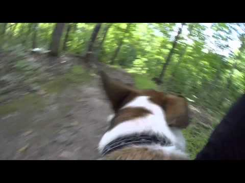 Walk in the woods, Dogs POV