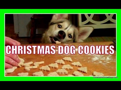 Homemade Christmas Dog Cookies Diy With Shiloh And Shelby Snacks