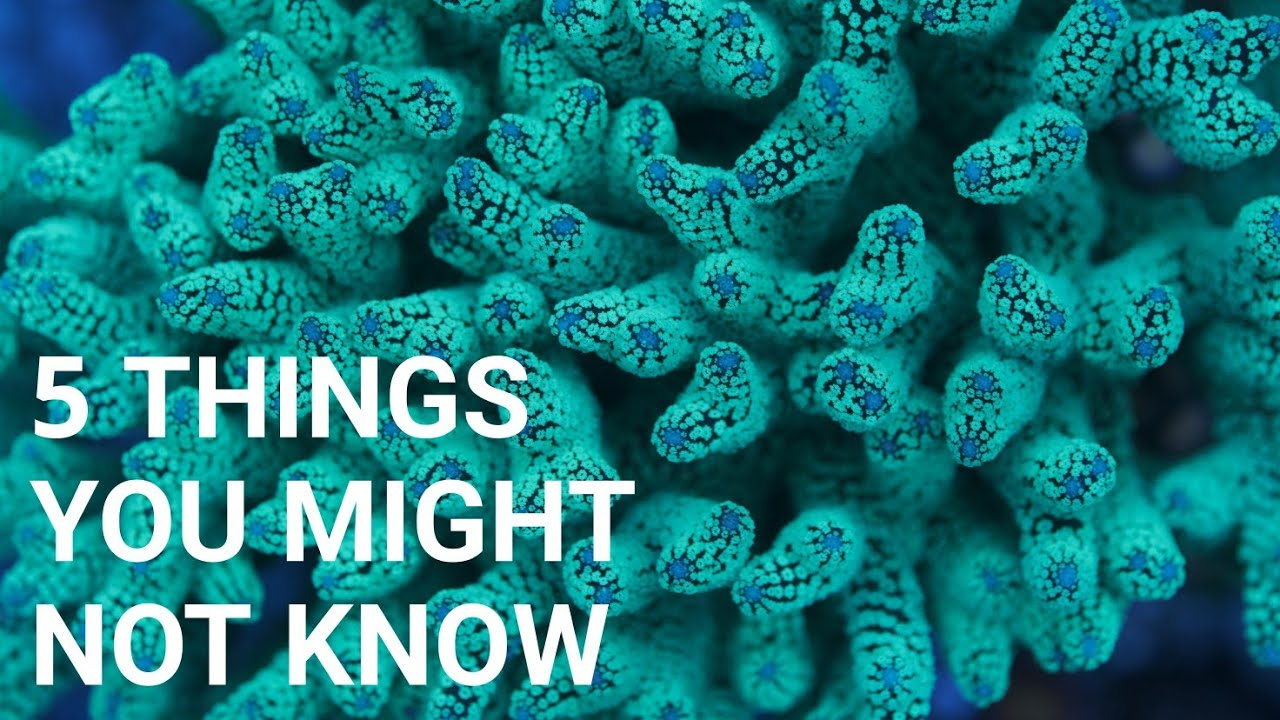 Saltwater Aquariums: Things You Didn't Know (not just noobs)