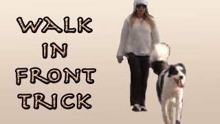 Walk Ahead Of Me Trick - Canine Freestyle Clicker Training