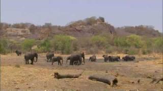 Teeny weeny elephant
