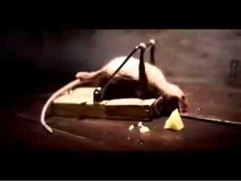 Lustige Maus Werbung