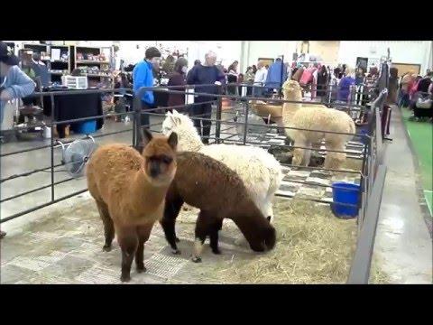 Alpaca Fest 2016