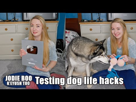 k'eyush-tests-easy-diy-dog-toys!-i-accidentally-make-a-rude-looking-dog-toy!