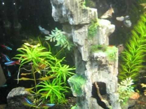 Продажа живых креветок для аквариумов. Живые креветки только на marin shop. Ru.