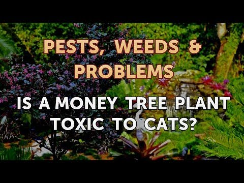Is A Money Tree Plant Toxic To Cats