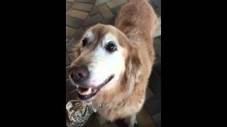 Dog reacts to her Cancer test results.