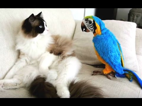 Thumbnail: Funny Parrots Annoying Cats Compilation || NEW HD