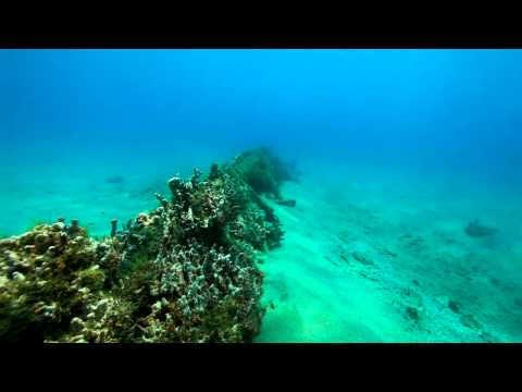 Tour of BHB Marine Park ( the Lembeh Straits of the Western Hemisphere!)