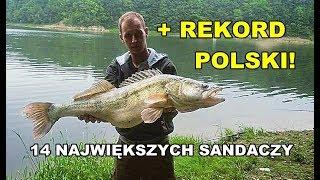 Sandacz rekord Polski + 14 największych sandaczy z zeszłego sezonu według WW