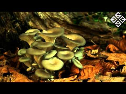 Клип Essex - Toadstools