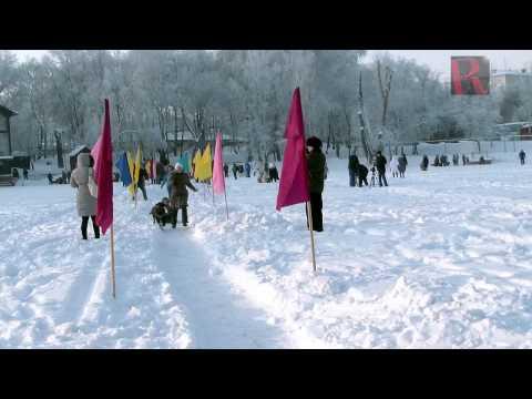 Sled dog racing festival in Ufa