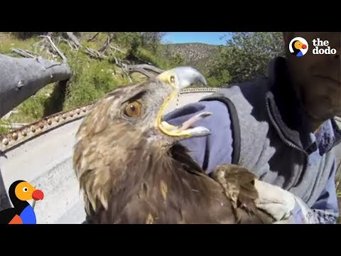 Starving Eagle Rescued from Well | The Dodo