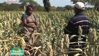 Kilimo Biashara Episode 26- Growing Sorghum