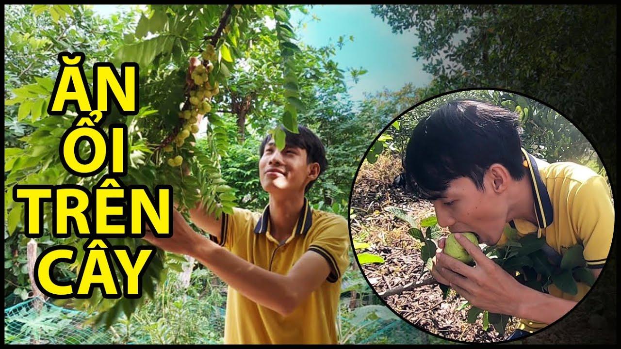 Quốc Chiến đột nhập vào vườn nhãn khổng lồ, lần đầu trải nghiệm ăn ổi trên cây | QUỐC CHIẾN TV