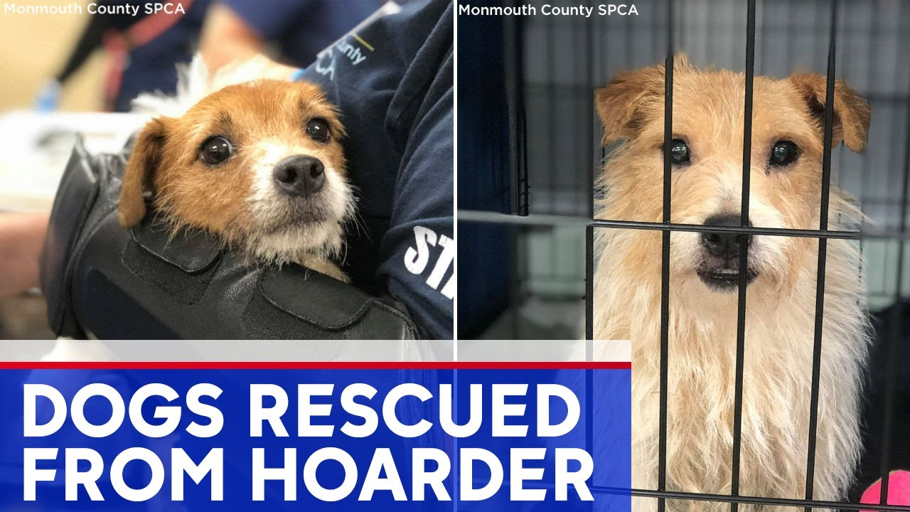More than 200 dogs rescued from hoarding home