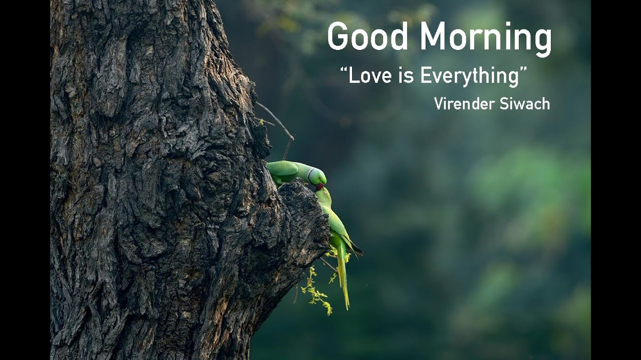 Nature and Parindey I Motivational I Relex and Sleep Songs I Music